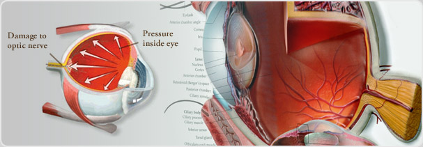 Glaucoma Page Banner